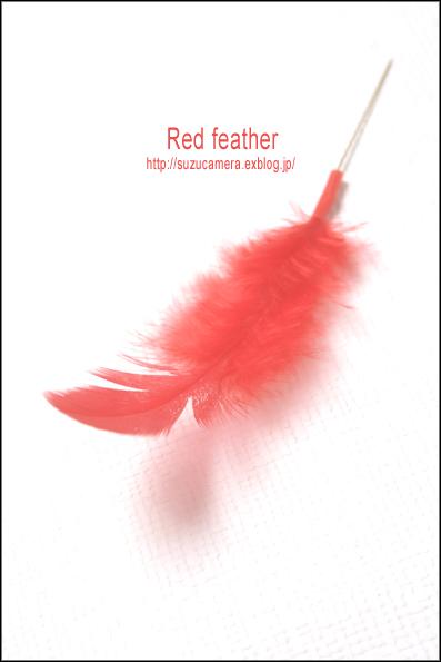 赤い羽根 _f0100215_09244.jpg