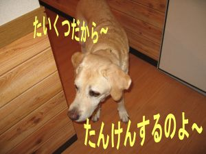 b0008217_2202520.jpg