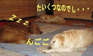 b0008217_223321.jpg