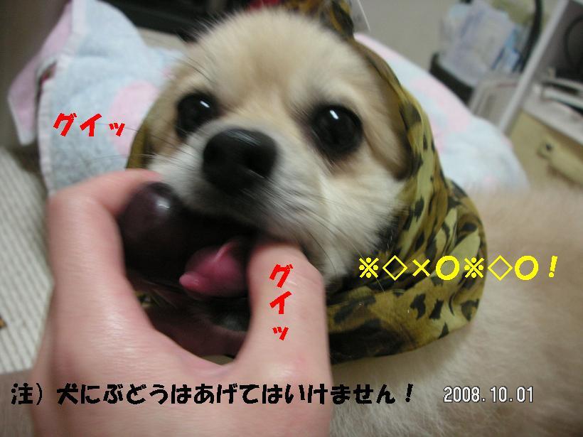 c0179136_11424033.jpg