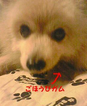 f0066289_036685.jpg