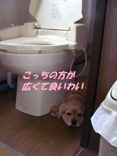 b0067012_8434714.jpg