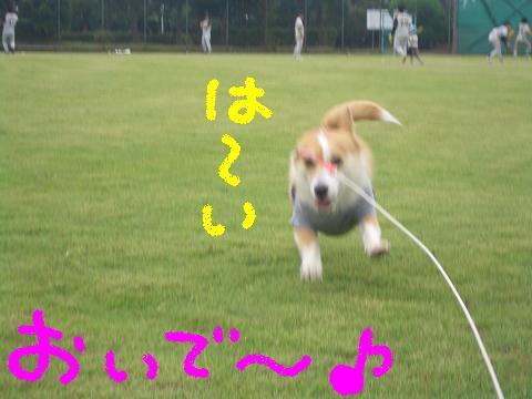 c0134720_0581685.jpg