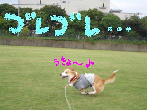 c0134720_0593296.jpg