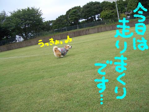 c0134720_0595717.jpg