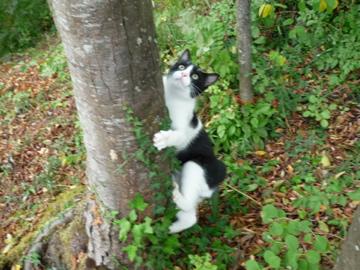 猫もおだてりゃ木に登る_d0136540_1604556.jpg