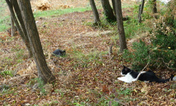 猫もおだてりゃ木に登る_d0136540_235743.jpg