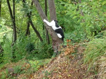 猫もおだてりゃ木に登る_d0136540_2395077.jpg