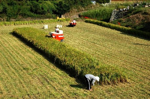 収穫の秋_b0093754_0101381.jpg
