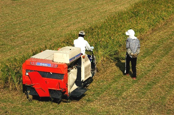 収穫の秋_b0093754_0104996.jpg