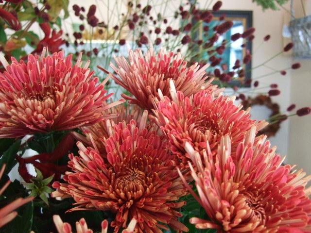 オークリーフ(ボルドー色の花)_f0049672_14595997.jpg