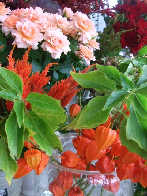 オークリーフ(ボルドー色の花)_f0049672_1572524.jpg