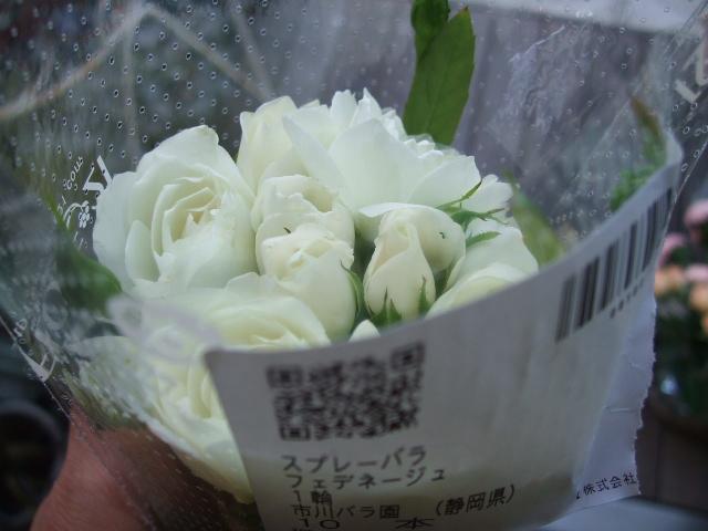オークリーフ(ボルドー色の花)_f0049672_1574946.jpg