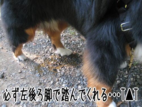 f0187974_14323673.jpg