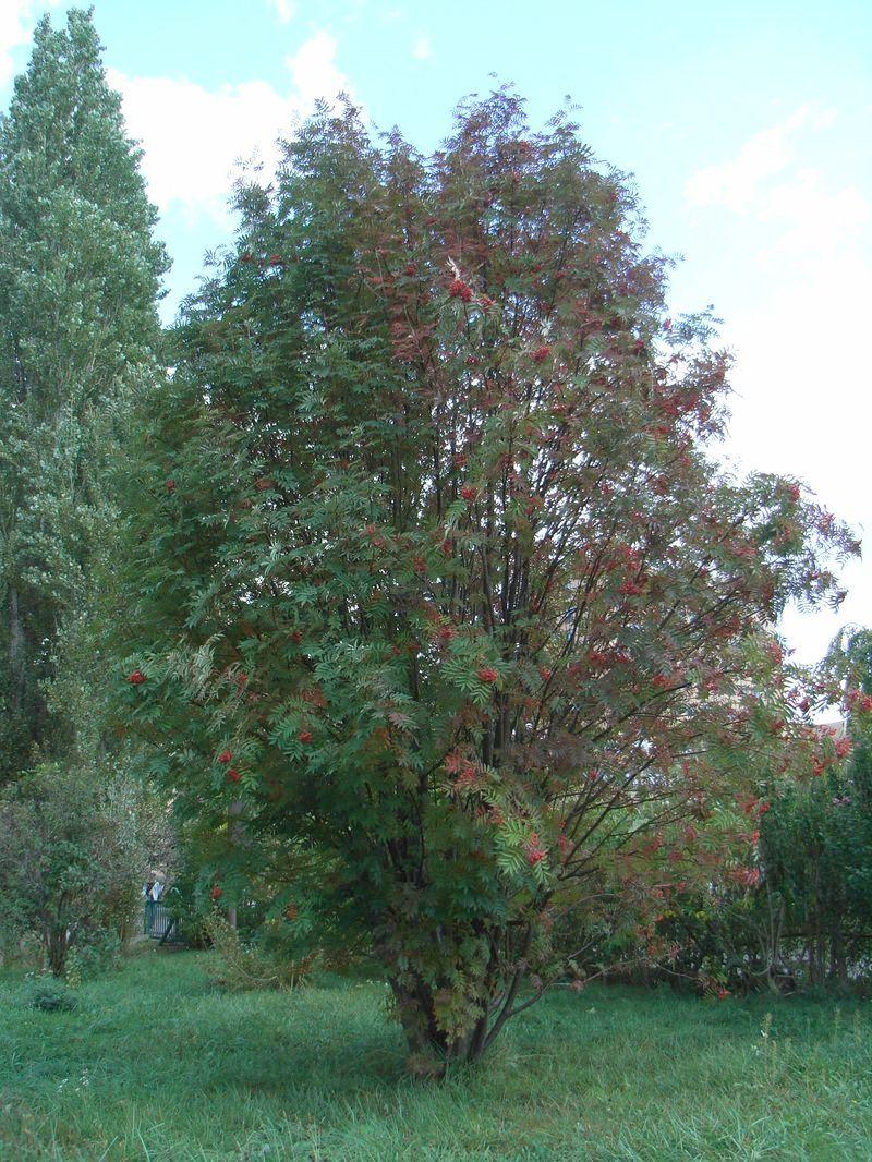 ポプラ並木周辺の秋_c0025115_17101574.jpg