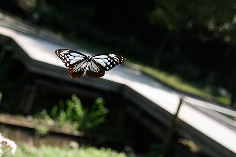 2008年10月上旬 多摩丘陵秋の蝶 お客さん_d0054625_20531910.jpg