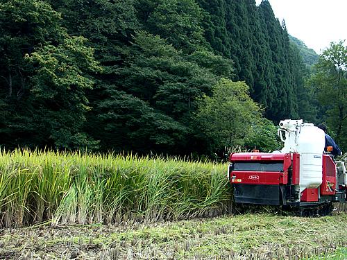古代米の稲刈り_c0176838_169127.jpg