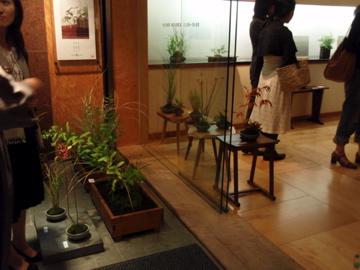 桜ショップの草展_b0132442_16582676.jpg