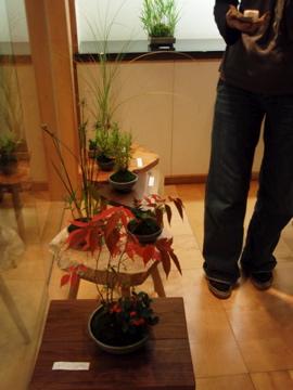 桜ショップの草展_b0132442_1785436.jpg