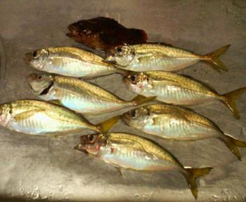 漁港_d0134352_0395781.jpg