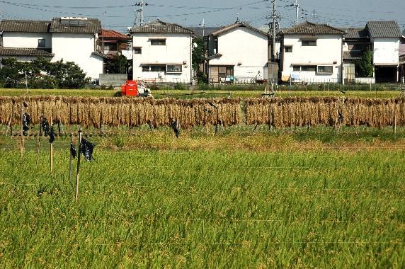 収穫の秋_b0093754_013143.jpg