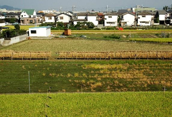 収穫の秋_b0093754_014563.jpg