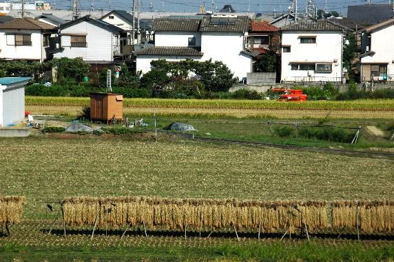 収穫の秋_b0093754_021633.jpg