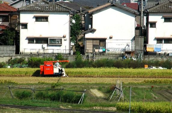 収穫の秋_b0093754_02477.jpg