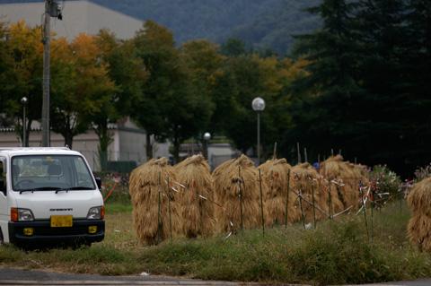 近所の秋景色_e0084756_14251538.jpg