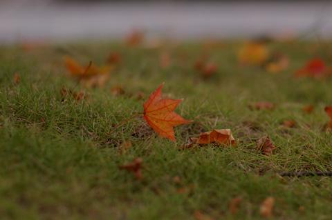近所の秋景色_e0084756_1603276.jpg