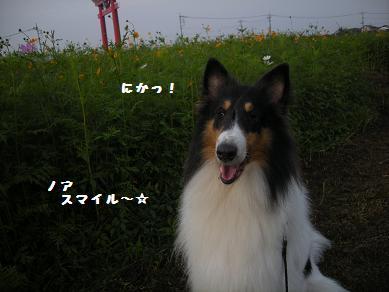 f0081100_912194.jpg
