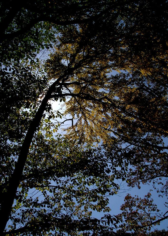 秋の丸沼 ープロローグー_c0095801_18524264.jpg