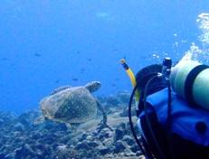 [ダイビング]サマカイ・リーフはのんびりオモシロイ!_a0043520_22384077.jpg