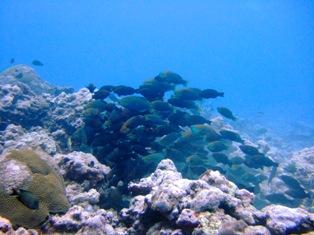 [ダイビング]サマカイ・リーフはのんびりオモシロイ!_a0043520_22392993.jpg