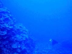 [ダイビング]サマカイ・リーフはのんびりオモシロイ!_a0043520_22423319.jpg