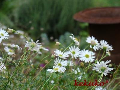 f0170524_158172.jpg