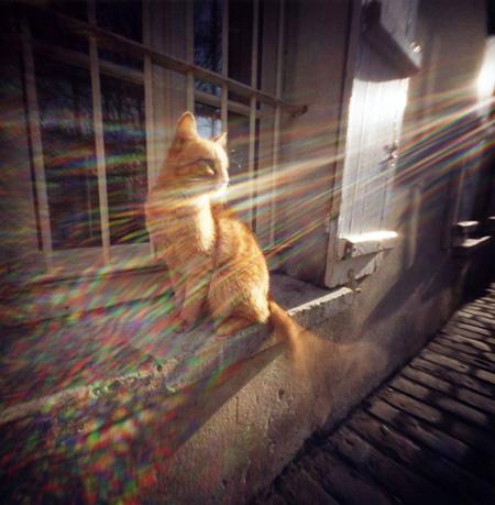 モンマルトルの気高い猫 Montmartre, Paris パリ Pinhole Photography_f0117059_18452673.jpg