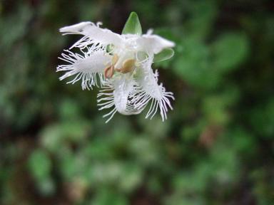金時山の花  Vol.  44_e0024094_10411268.jpg