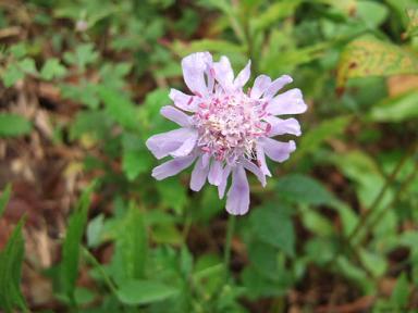 金時山の花  Vol  45 -フィトンチットー_e0024094_11574050.jpg