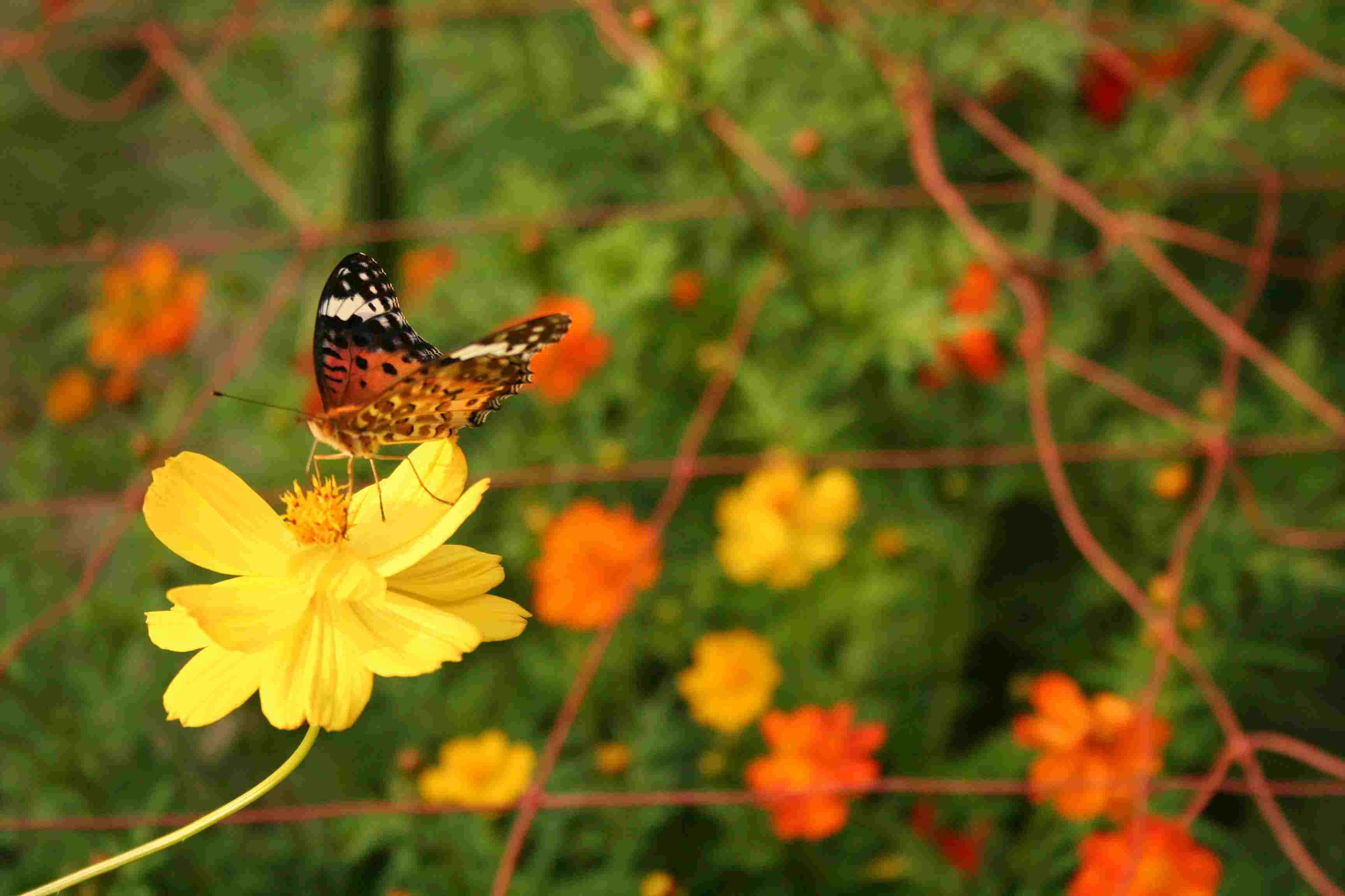 京都府立植物園 秋の花 きのこ展_c0100195_10223410.jpg