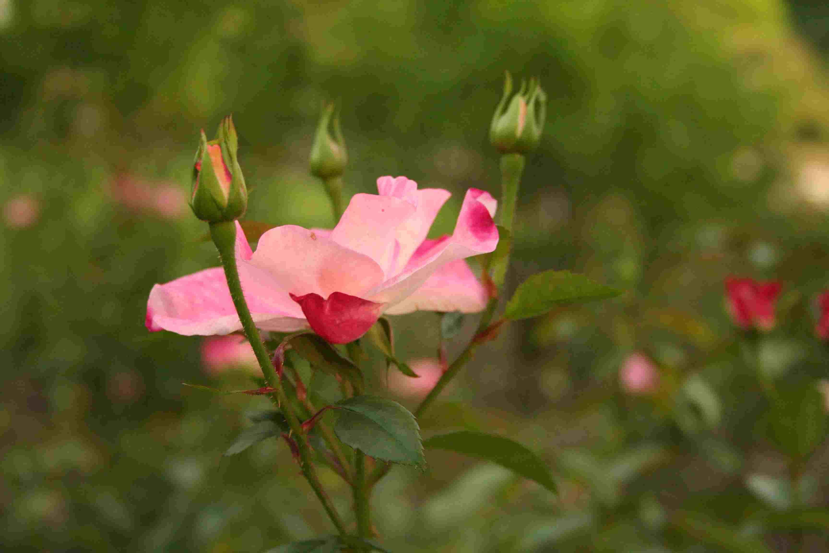 京都府立植物園 秋の花 きのこ展_c0100195_10275482.jpg