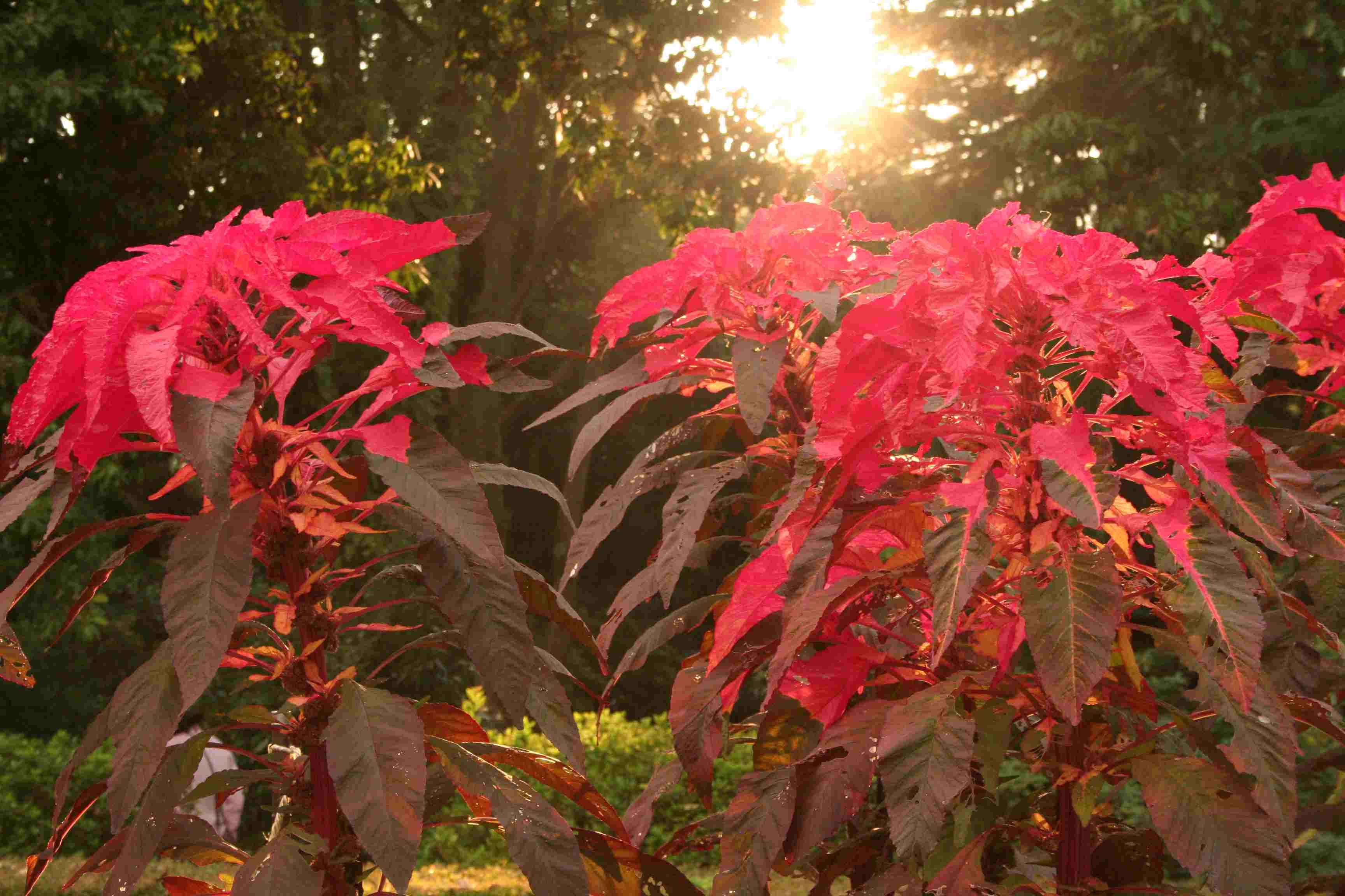 京都府立植物園 秋の花 きのこ展_c0100195_10294115.jpg