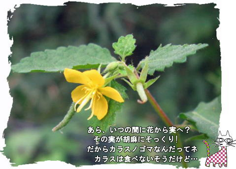 f0137096_15304741.jpg