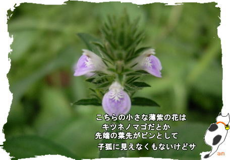 f0137096_15314312.jpg
