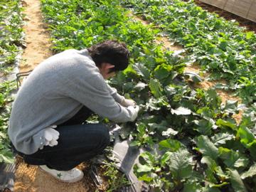 小林、秋野菜を収穫!_c0130206_2322315.jpg