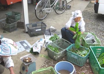 小林、秋野菜を収穫!_c0130206_2358838.jpg