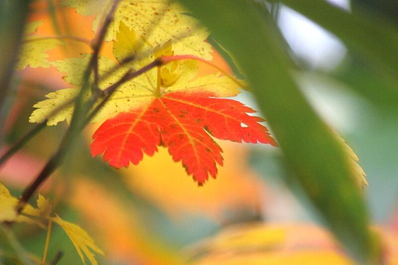 紅葉真っ盛り!_d0070814_2144243.jpg