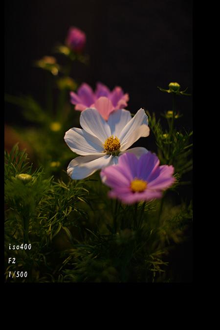 f0014815_19494069.jpg
