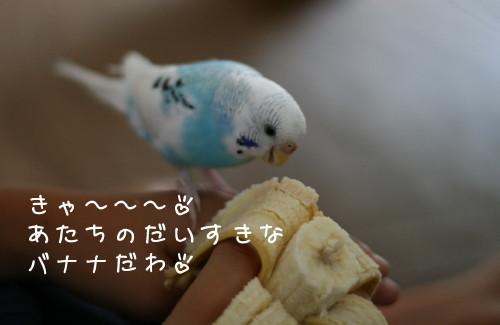 b0143835_1149787.jpg