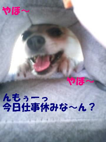 c0179136_2363046.jpg